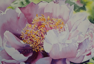 Watercolour image of Peony