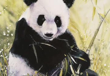 A panda in a field of bamboo