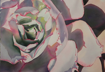 Watercolour painting of a succulent flower